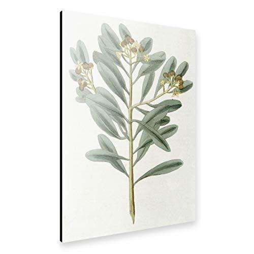 artboxONE Alu-Print 90x60 cm Zimtpflanze von Künstler Culture Images