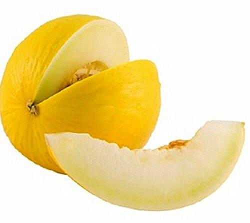 Honigmelone Canary Yellow - Melone - 10 Samen