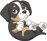 Bambinella® Bügelbild Aufbügler - gedruckte Velour/Flock Applikation zum selbst Aufbügeln - Motiv: Hund Entlebucher Sennenhund - gefertigt in eigener Werkstatt in Neuhof/Deutschland
