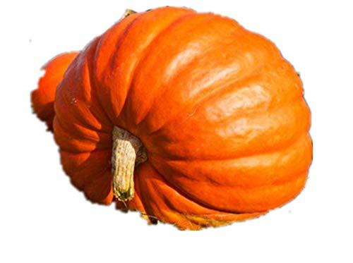 KINGDUO 10Pcs/Pack Graines De Citrouille Géante Grand Terrain Courges Ornementales Semences Potagères Décoration De Halloween