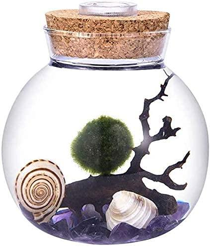 Ecosides LED Aquarium Moosball Marimo Terrarium Kit,Mikrolandschaft Deko Flasche Glas Container Jar Nachtlicht,Mit Lebenden Moosbällchen,Kieselsteinen,Muschel,Fächerkoralle (Stil 1)