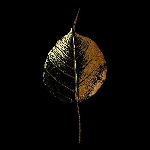 Queence | Acrylglasbild mit Blattgold | Wandbild Glasbild Acrylbild Rahmenlos | Blatt | Druck auf Acrylglas | Goldveredelung | Größe: 60x60 cm