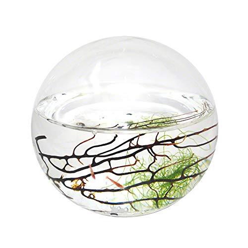 Ecosphere Small Sphere