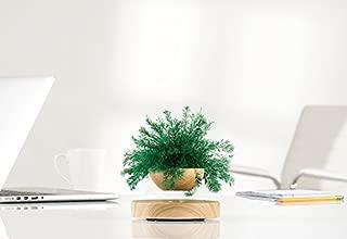 sharper image levitating fern
