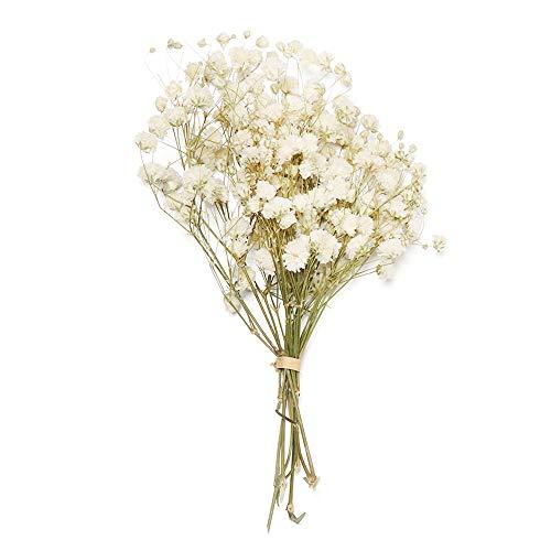 YUNGLI Mini natürliche getrocknete Blumen Bouquet natürliche frische getrocknete konservierte Blumen kleine trockene Blumen Home Decoration(beige)