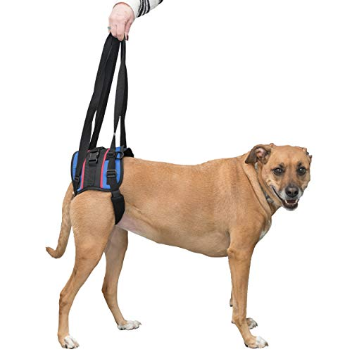 Walkin' Lift Combo Rear Dog Harness for Mobility   Helps Dogs with Arthritis, Senior Dogs and Pets Recovering from Surgery