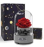 Hallooki HAUS Ewige Rose Spieluhr, Rosenbox mit Infinity Rosen, Echte Blumen Geschenk für Frau Freundin Muttertag Geburtstag Hochzeit...