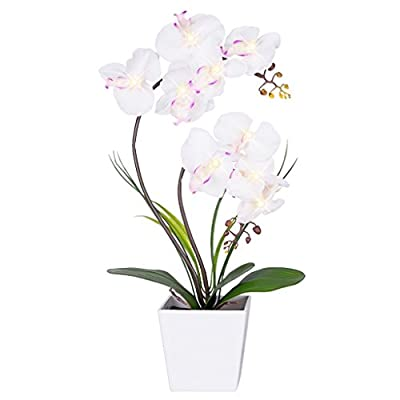 HOMESEASONS LED Lighted Artificial Phalaenopsis Orchid Arrangement with 9 Lights,White