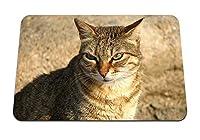 26cmx21cm マウスパッド (猫の顔色ストライプ) パターンカスタムの マウスパッド