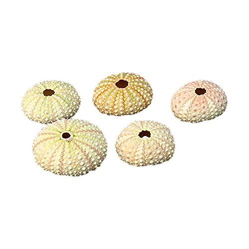 GFEU 5 Paket Natürliche Seeigel DIY Aquarium Landschaft Dekorationen Ornament für Aquarium (Seeigelschale)