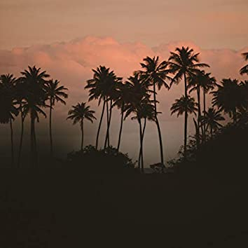 Palm Trees in Heaven   Heavenly Sounds of Nature