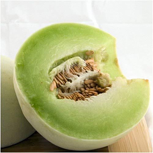 Fash Lady Paquet de 100 Graines, Graines de Melon Vert Honeydew (Cucumis melo)