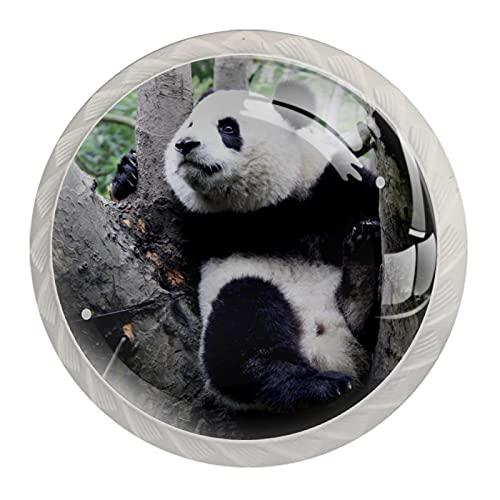 FURINKAZAN Tirador para armario con diseño de panda de árbol de escalada para bebé, 4 unidades