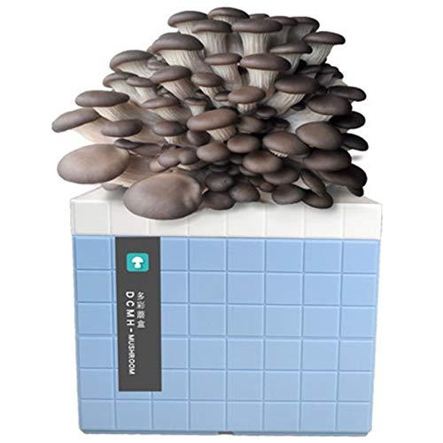 Rowe Kit de Crecimiento de Hongos Interior, orgánico Oyster Seta Mycelium Spawn Spores Bag Kit Completo, Cosecha en 2-3 semanas (Color : Blue)