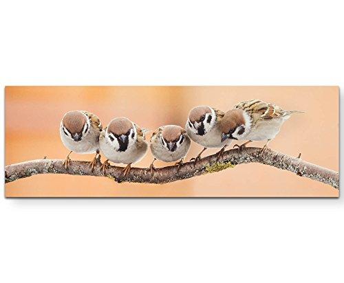 Paul Sinus Art Leinwandbilder | Bilder Leinwand 120x40cm Vögel auf einem Zweig