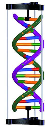 DNA Doppelhelix-Modell, Student Kit