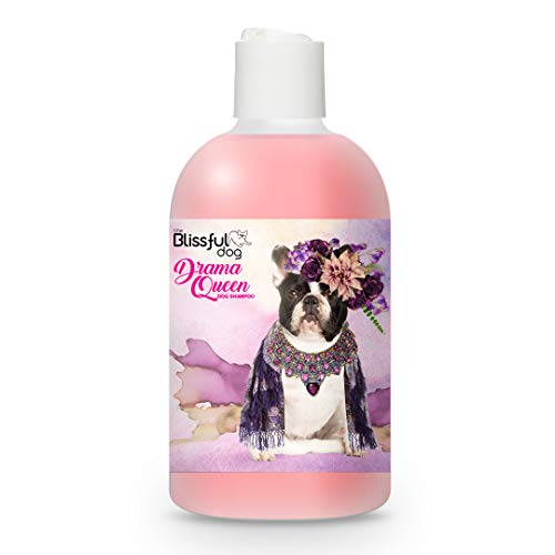 The Blissful Dog Pied French Bulldog Drama Queen Dog Shampoo, 8-Ounce