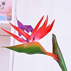 Zamihalaa 12CM Head/Length80CM Real Touch Fake Plastic Tropical Bird of Paradise Flower,Artificial Silk Long Flowers Home Decoration – 02