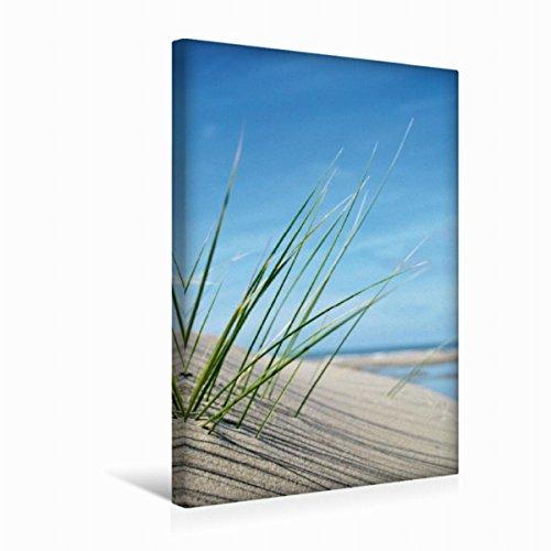 CALVENDO Premium Textil-Leinwand 30 cm x 45 cm hoch, Dekoratives Strandgras | Wandbild, Bild auf Keilrahmen, Fertigbild auf echter Leinwand, Leinwanddruck Natur Natur