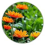 Caléndula (Calendula officinalis), Aprox. 50 Semillas,...
