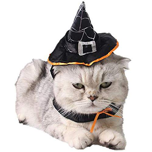Witch Hat Pet Wizard
