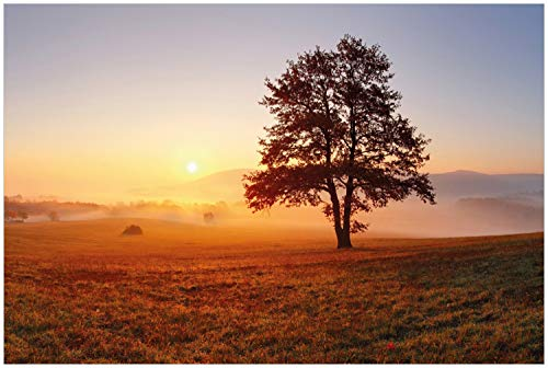 Wallario Glasbild Sonnenaufgang über der Wiese mit Nebel - 60 x 90 cm in Premium-Qualität: Brillante Farben, freischwebende Optik