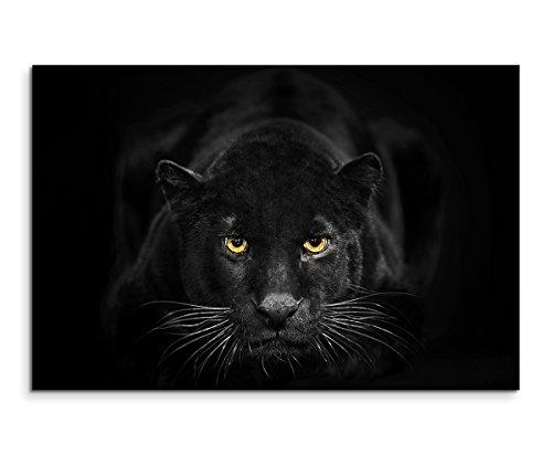 Sinus Art Wandbild 120x80cm Tierfotografie – Schwarzer Leopard mit bernsteinfarbenen Augen Nicht GEFUNDEN