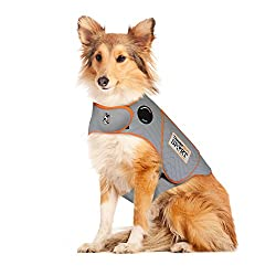 dog with anxiety vest on