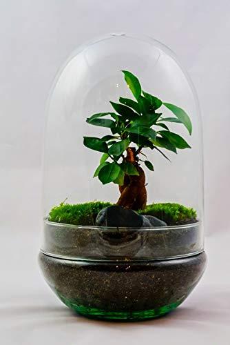 GreeneryLiving EGG-6 Premium DIY-Flaschengarten - Ökosystem im Glas - hochwertiges Pflanzenterrarium - Mini-Garten mit echten Pflanzen - Design-Accessoire...