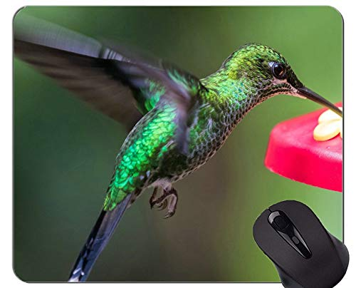 Customized Rectangle Non Slip Rubber Mousepad,Hummingbird Bird Wing Gaming Mouse Pads
