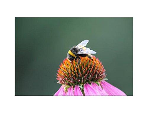 deinebilder24 Art Print XXL Canvas 80 x 120 cm Bauer Art Bumble Bee on the Blossom I