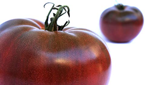 Tomatensamen *rarität* Schwarze Tomate/ca. 50 Samen/Gemüsesamen