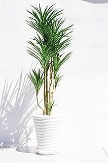 インテリアグリーン人工観葉植物・新ユッカ陶器鉢受け皿付き、光触媒製品