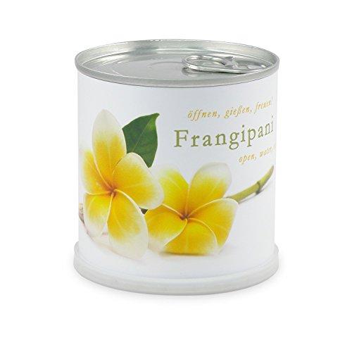 Fleurs dans la boîte Frangipanier – Plumier de macfl owers