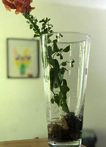Maison Zoe Mundgeblasene und Handgefertigte Glasvase Iris - 30cm hoch - Blumenvase - Deko & Hochzeit