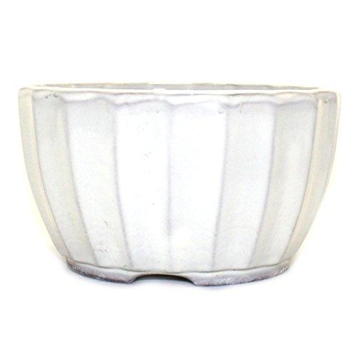 Bonsai Pot Ceramic Chrysanthemum Flower Shape Glazed (5', Cream-Yu)