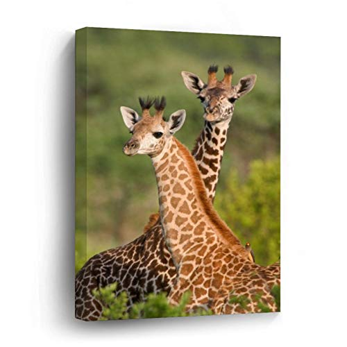 Pair of Giraffe Babies Canvas Picture Painting Artwork Wall Art Poto Framed Canvas Prints for Bedroom Living Room Home Decoration, Ready to Hanging 24'x36'