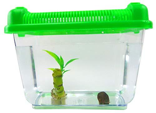 Evil Wear Aquarium Set Posthorn Wasser Schnecke schwarz mit Futter, Pflanze und Aquarium Kinder Erwachsene Aqua Snail Plant Einsteiger Starter Set (1Stk schwarz) 4792