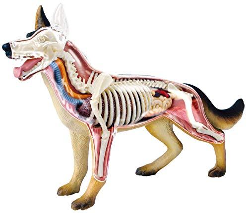 立体パズル 4D VISION 動物解剖 No.18 犬解剖モデル