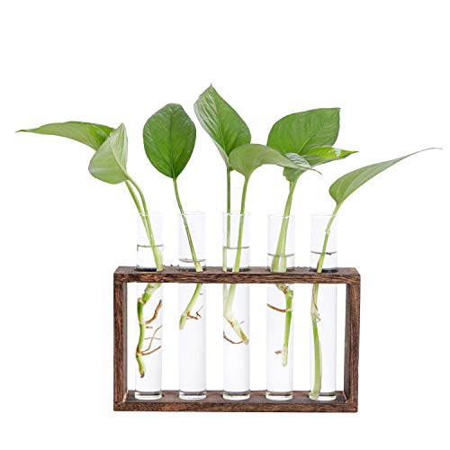 Hyindoor Vase en Verre de Tube à Essai avec Support en Bois pour Plantes Hydroponiques Tube Vase Vintage Décoratif pour Tenture MuraleCadeaux pour la Saint Valentin Noël Anniversaire, 5 Trous