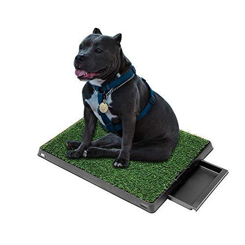 GreeSuit Inodoro para Cachorros Aseo para Perros con césped Artificial 63 x 50 cm Aseo para Perros Alfombrilla de Entrenamiento para Inodoro para Perros pequeños y Mayores