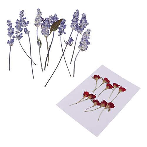 FLAMEER 20PCS Fine Pressed Sage Rose Flower Dried Flowers for Art Craft Scrapbooking
