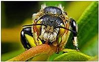 Phinli 大人の木製パズル1000ピース蜂の詳細アート絵画