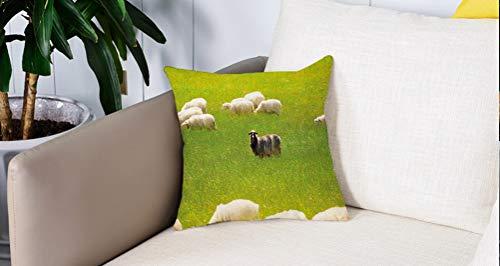 Square Soft and Cozy Pillow Covers,Naturaleza, ovejas negras entre cabras blancas en el campo de hierba Pradera Paisaje de granja ,Funda para Decorar Sofá Dormitorio Decoración Funda de almohada.
