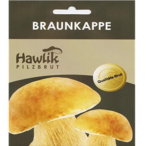 Hawlik Pilzbrut I das Original I Braunkappe als Dübel-Brut zum selber züchten I kinderleicht frische Pilze züchten