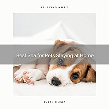 2021 Best Sea for Pets Staying at Home