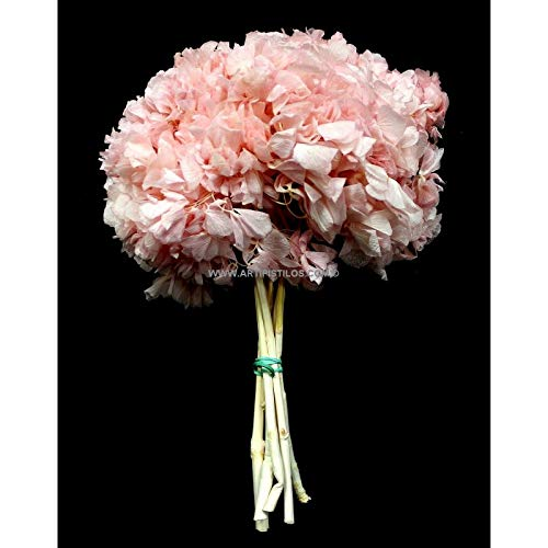 Artipistilos Hortensia Preservada Natural Premium - 23 X 23 Cms, Rosa Claro - Flores Preservadas