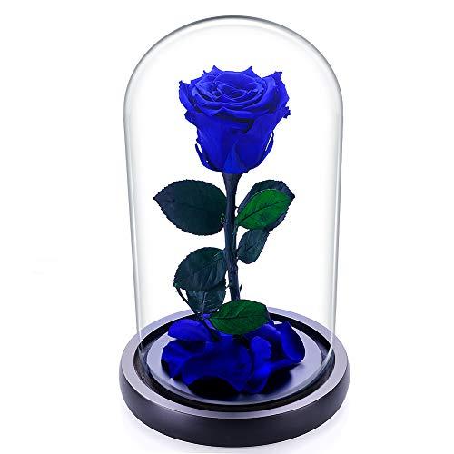 Rosa fresca Zhuotop preservada para siempre en campana de cristal