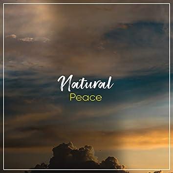 # 1 A 2019 Album: Natural Peace