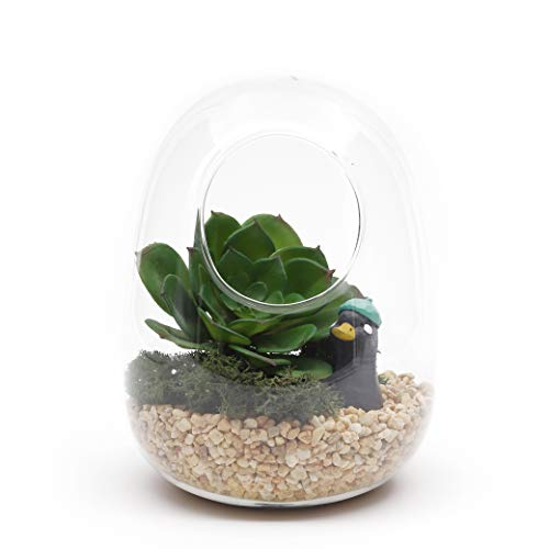 Glass terrarium with air hole